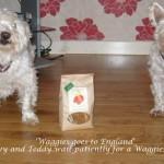 Snowy and Teddy enjoying Waggies 045
