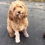 Spencer in Socks