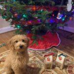 Rudy at Christmas